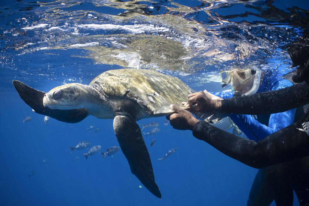 Heroic Divers Save Turtle From Slow Death After Becoming Trapped In Fish Netting Caters News Agency