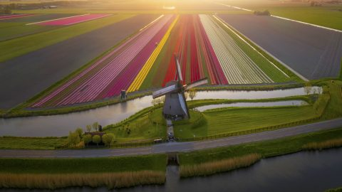 Tulip Season – Photographer Captures The Netherlands Jaw-dropping Tulip Fields. Image