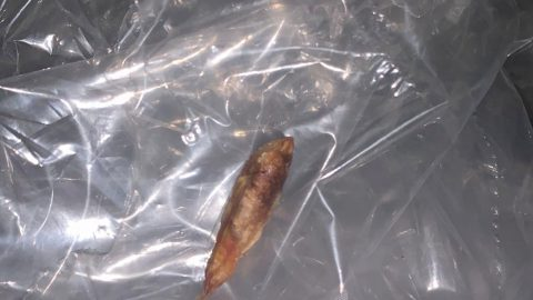 Fishy Business! Mum's Shock After Finding Dead Goldfish In Boohoo Bag For Teen Daughter Image