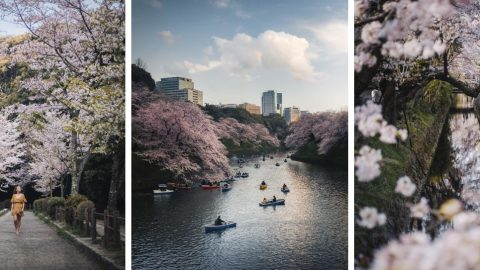 Stunning Images Of Cherry Blossoms In Japan Image