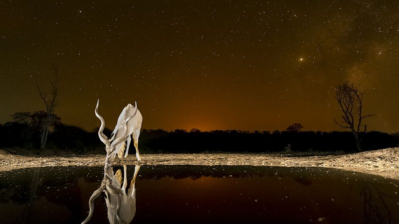 Stunning Photos Show Safari Animals Lit Up In Night Sky Image