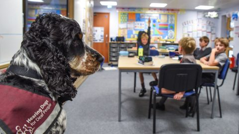 Schoolby-doo! Assistance dog 'teaches' class for deaf teacher Image