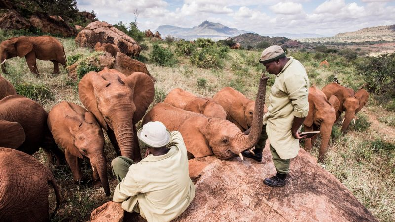 Amazing Photos Show Bond Between Orphaned Elephants And Their Keepers Image