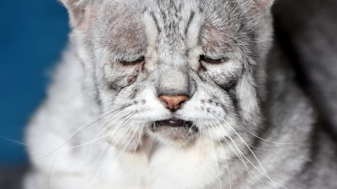 Sour puss! Cat has a syndrome making him look permanently sad Image