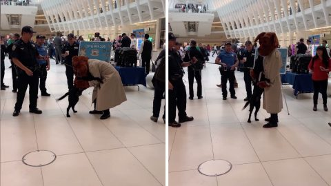 Adorable moment police dog becomes excited meeting mcgruff the crime dog Image