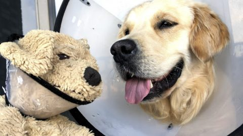 Dog And Stuffed Toy Are Soulmates That Do Everything Together Image