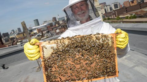 Man Committed To Saving Uks Bees Moves His Hives And 150,000 Bees Onto Roof Of His City Centre Office So He Can Tend To Them On His Lunch Break Image