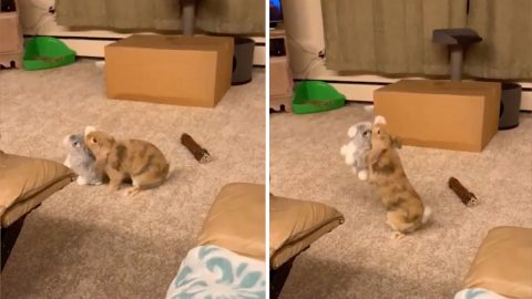 Adorable Bunny Is Best Friends With Stuffed Bunny Image
