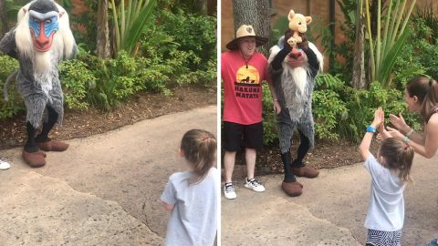 The circle of life! Lion king characters help family with gender reveal Image