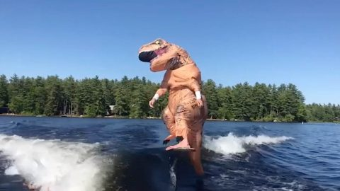 Dino-surfs! Man in t-rex costume surfs on a hydrofoil board Image