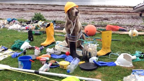 INTELLIGENT WEIMARANER CRACKS DOWN ON PLASTIC POLLUTION ACROSS UK BEACHES IN BID TO HELP OWNERS Image