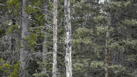 WHERE ARE TWOO? OWL IS PLAYING HIDE AND SEEK MAKING IT IMPOSSIBLE TO SPOT Image