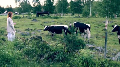 SWEDISH MUSICIAN CHANNELS INNER SNOW WHITE BY ATTRACTING COWS AND BIRDS WITH HER TRADITIONAL SINGING Image