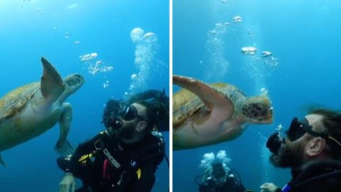 INCREDIBLE MOMENT SEA TURTLE MUNCHES ON SCUBA DIVER'S BUBBLES MISTAKING THEM FOR JELLYFISH Image