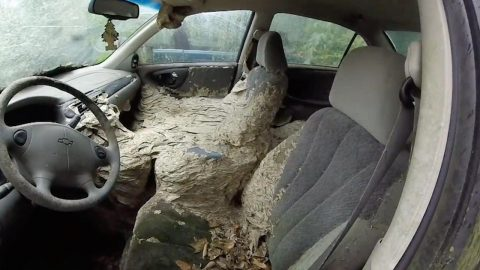 SKIN-CRAWLING FOOTAGE SHOWS GIANT NEST CONTAINING MORE THAN ONE MILLION WASPS TAKING ROOT IN ABANDONED CAR Image