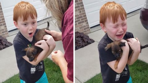 HEART-WARMING MOMENT BOY IS SURPRISED WITH TINY PUPPY AFTER SAVING ALL OF HIS CHANGE TO BUY ONE Image