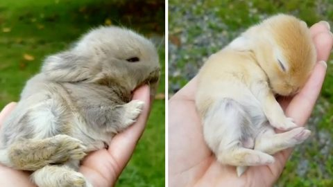 ADORABLE TINY HANDHELD BUNNIES ARE THE PERFECT FIT FOR RELAXING THERAPY SESSIONS Image