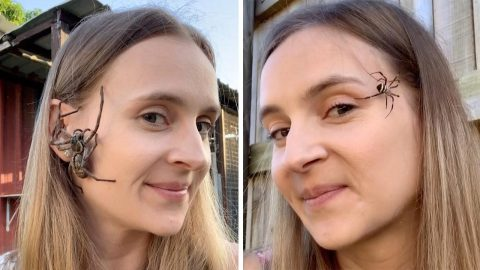 ONLY IN AUSTRALIA...WOMAN RELAXES BY LETTING SPIDERS CRAWL ON HER FACE Image