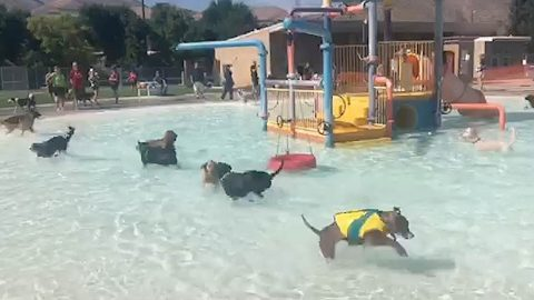 DOGGY PADDLING POOL: WATER PARK TRANSFORMED INTO DOGGY PADDLE DELIGHT FOR POOL PARTY Image