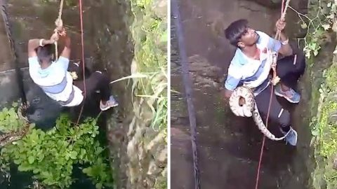 MOMENT GOOD SAMARITAN CLIMBED DOWN WELL TO RESCUE PYTHON Image