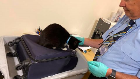 NEW YORK KITTY! MARRIED COUPLE GET PULLED INTO AIRPORT INTERROGATION ROOM AFTER CAT SNEAKS INTO HAND LUGGAGE Image