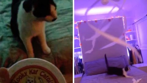 CRAZY FOR CATNIP: FIESTY FELINES ATTACK CEILING FAN DRIPPING WITH TOILET PAPER AFTER FEASTING ON CATNIP IN HILARIOUS VIRAL VIDEO Image