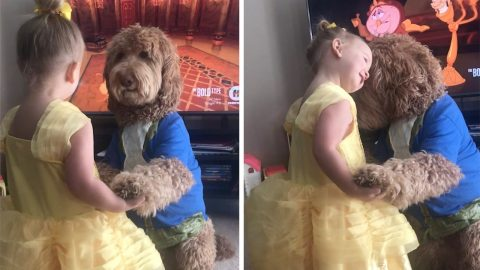 ADORABLE MOMENT TODDLER AND GOLDENDOODLE DANCE TO BEAUTY AND THE BEAST SOUNDTRACK Image