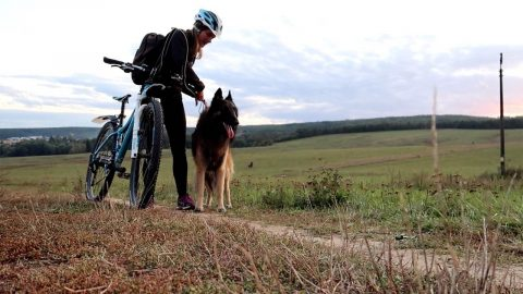 ENERGETIC DOG CAN'T HIDE EXCITEMENT WHEN HE GOES BIKE RIDING WITH OWNER Image