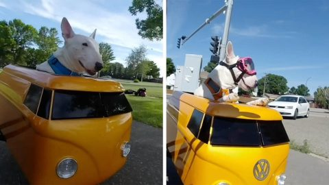 LOVING OWNER SPENDS OVER 100 HOURS CREATING CUSTOM SIDECAR FOR AGEING DOG TO RIDE IN Image