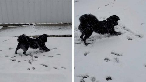 THREE-YEAR-OLD DOG GOES WILD AFTER FIRST SIGHTING OF SNOW AFTER MOVING HOME Image