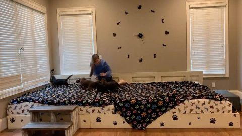 TOP AND TAILS – COUPLE BUILD 13FT WIDE BED SO THEY CAN SLEEP WITH THEIR SEVEN DOGS Image