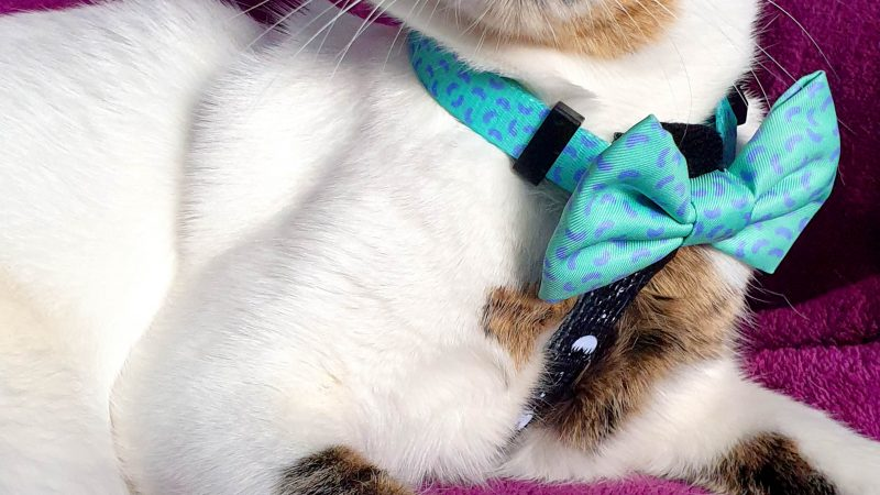 DAVID MEOWIE! COLOURFUL CAT WINS OVER THE HEARTS OF INSTAGRAM Image