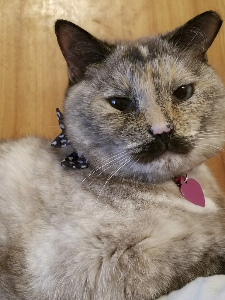CHARLIE CAT-LIN: PUSS WITH A MOUSTACHE CAUSES INTERNET STORM - Storytrender