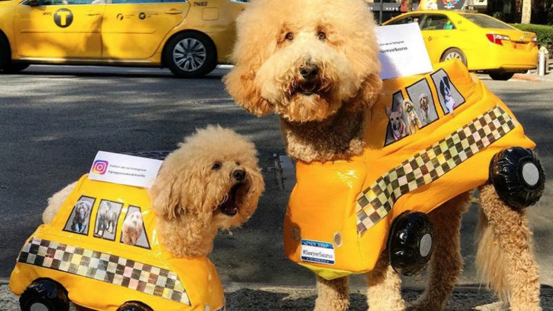 LITTLE AND LARGE BEST PALS - ADORABLE DOGS ARE INSEPARABLE AND EVEN DRESS THE SAME Image