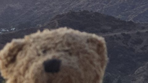 ALL ABOARD THE BEAR-O-PLANE; LITTLE GIRLS TEDDY TRAVELS THE WORLD IN HER MEMORY Image