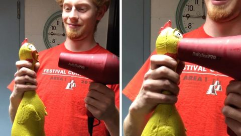 WHEN A HAIR DRYER MEETS RUBBER CHICKEN YOU GET ONE HELL OF A SCREAM Image