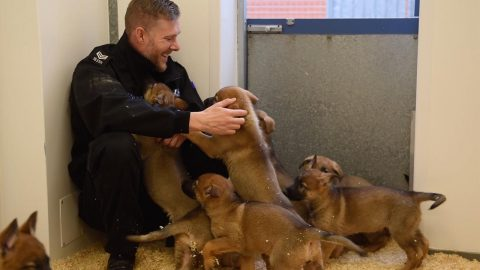 POLICE DOG UNIT WELCOMES ITS NINE NEWEST AND CUTEST MEMBERS - A LITTER OF PAWS-ITIVELY PERFECT PUPS Image