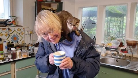 GRANDMA HAS LIVED WITH OTTERS FOR 40 YEARS - AND SAYS THEY HELP HER AROUND THE HOUSE Image