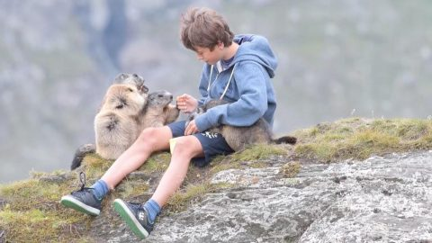 TEENAGER'S EXTRAORDINARY BOND WITH WILD ALPINE MARMOTS – MORE THAN A DECADE AFTER THEIR FIRST MEETING Image