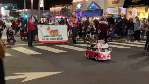 IS THIS THE WORLD'S CUTEST PARADE? PARADE FULL OF CORGIS DRESSED IN CHRISTMAS COSTUMES TAKES OVER CALIFORNIA Image