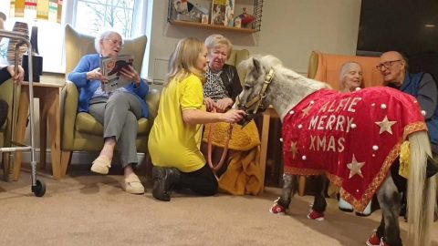 DONT BE AN ASS! MINI THERAPY PONY TRAINS HIS LATEST RECRUIT - A THERAPY DONKEY Image