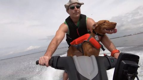 TRULY A MANS BEST FRIEND -  EXTREME SPORTS DOG ENJOYS 43MPH RUNS, JET SKIING, KAYAKING AND DIVING Image