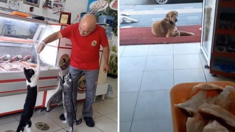 GENEROUS BUTCHER FEEDS CATS AND DOGS EVERY DAY AS THEY WAIT OUTSIDE HIS SHOP Image