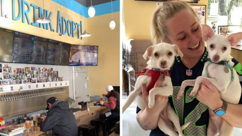 WHO LET THE DOGS OUT! ANIMAL LOVER CREATES FIRST EVER TAP HOUSE WHERE BOOZERS CAN ADOPT DOGS WHILE THEY DRINK Image