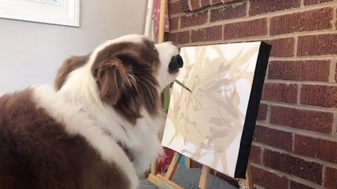 PAWBLO PICASSO! DOTING OWNER CLAIMS TALENTED POOCH MADE OVER $300 IN 'FIRST CANINE ART INSTALLATION' Image