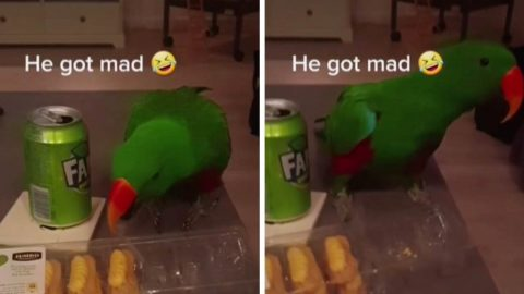 ANGRY PARROT THROWS A TANTRUM BECAUSE HE CAN'T HAVE A SNACK Image