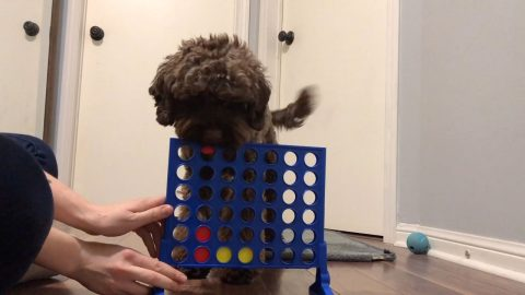 CONNECT PAW: FOUR-LEGGED-FRIEND LEARNS HOW TO PLAY CONNECT FOUR Image
