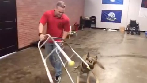 HYPERACTIVE POOCH PROVES HE WON'T CUT IT AS SERVICE DOG BY FLIPPING WHEELCHAIR AND DRAGGING IT EVERYWHERE Image