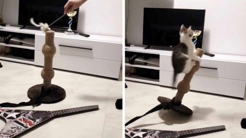 PLAYFUL PUSS DIVES INTO SCRATCH POST IN AMUSING CLIP Image
