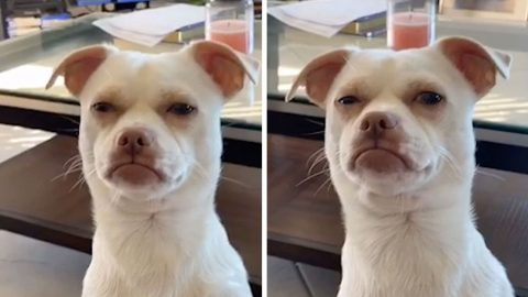 DOG WITH HUMAN-LIKE FACE GIVES DISAPPROVING LOOK TO OWNER Image